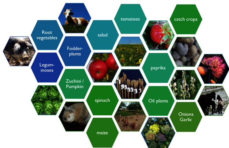 Schematic representation of the large number of cultivated species and animal species to be targeted by organic breeding. These are shown here only as examples in the form of pictures or text.